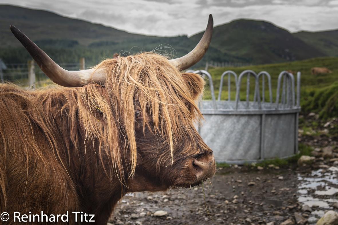 Schottland V
